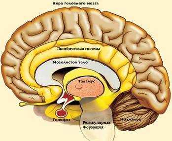 Ретикулярная формация (сетчатое вещество мозга) была описана анатомами в конце прошлого века.
