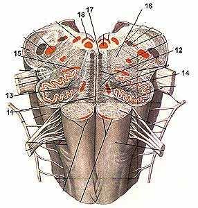 13333 - Анатомия. Контрольная работа