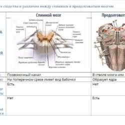 Анатомия. Контрольная работа