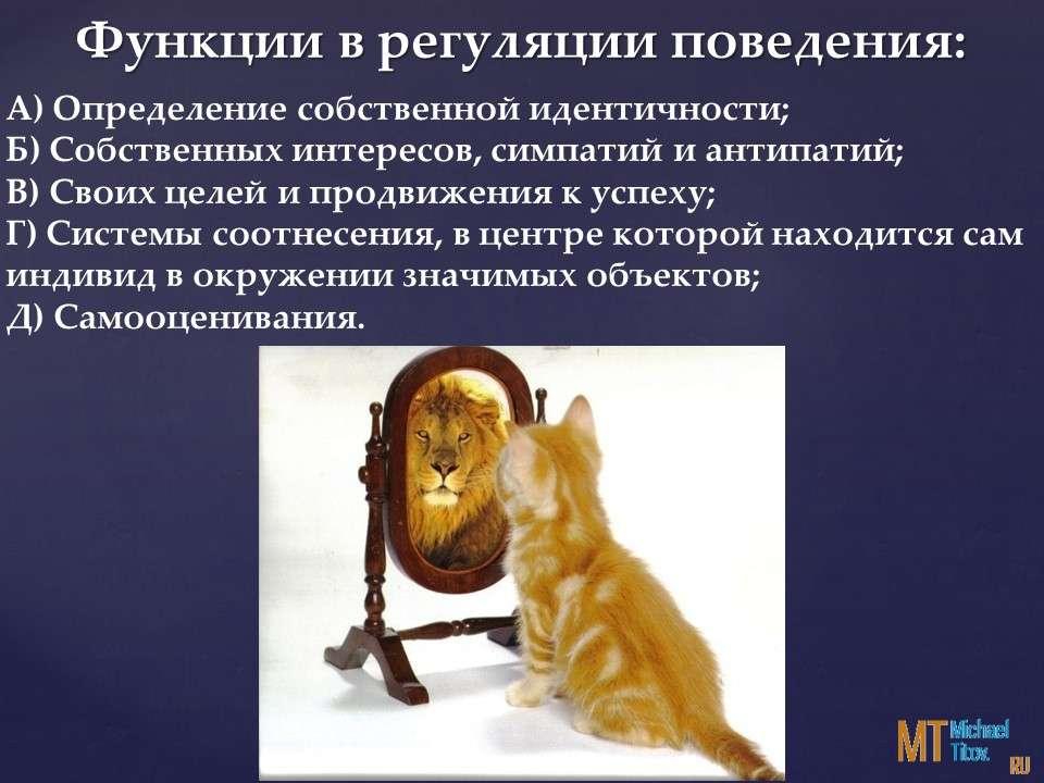 Функции в регуляции поведения: