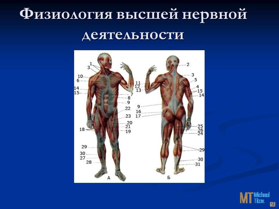 Физиология высшей нервной деятельности
