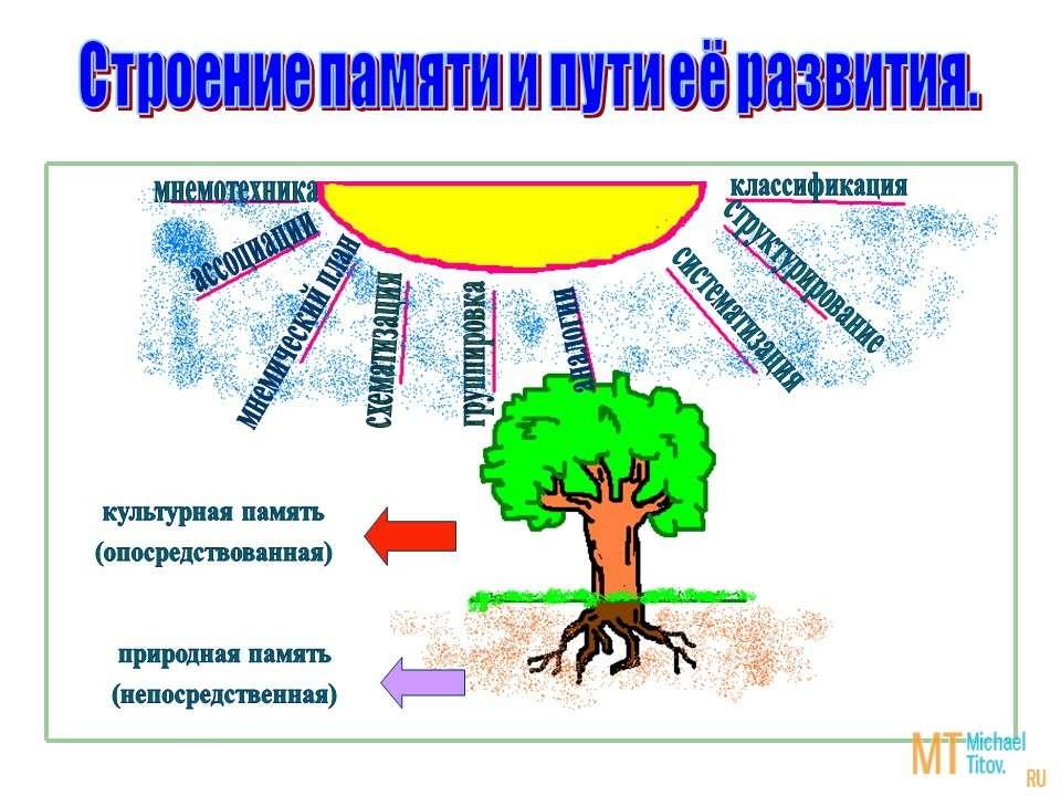 Строение памяти и пути её развития.