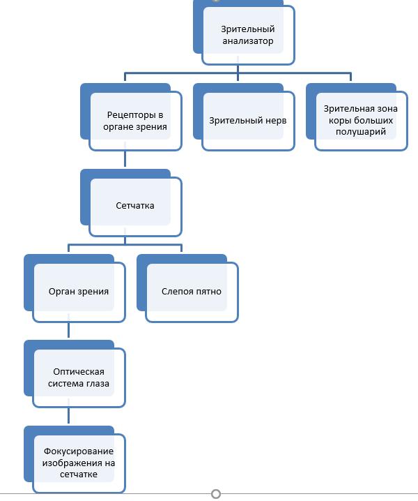 Нарисуйте схему зрительного анализатора и обозначьте отделы