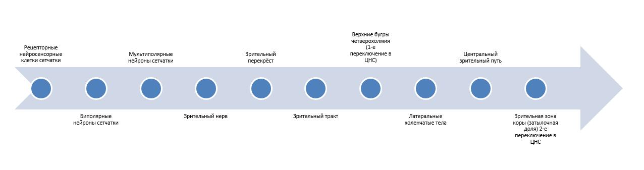 Зрительная сенсорная система